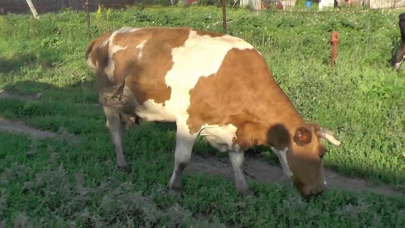 Молочный кластер Акмолинской области будет занесен в единую платформу ЕС