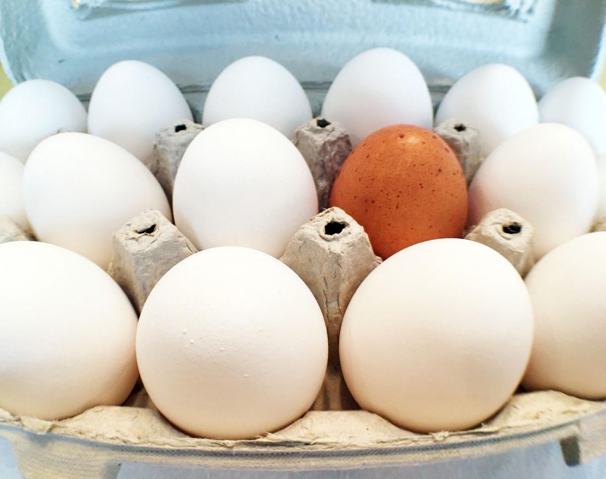Производство куриных яиц приносит больше дохода, чем зерновой бизнес