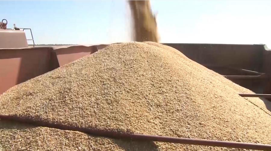Қостанай бидайы алғаш рет Африкаға экспорттала бастады
