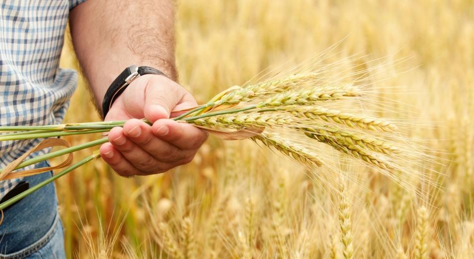 Банк Астаны остановил транзакции зерновикам