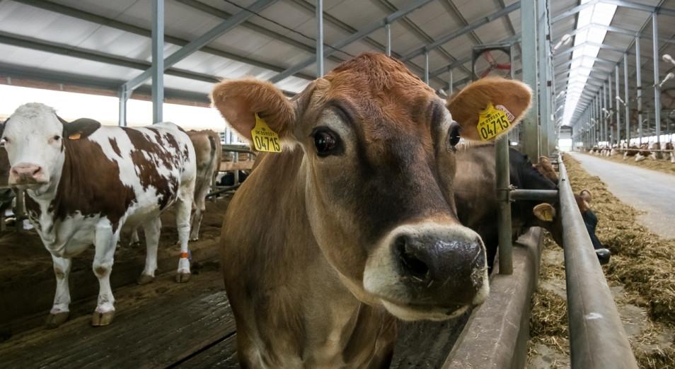 Порядка 100 тысяч малых ферм мясного направления будет создано в РК за 10 лет – Шукеев