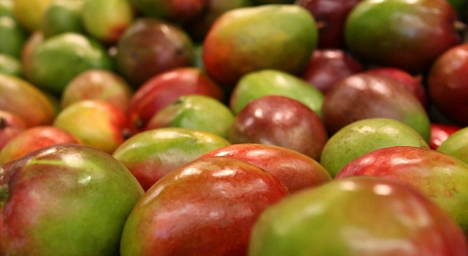 Үндістан мангосымен Қазақстанды да жаулағысы келеді