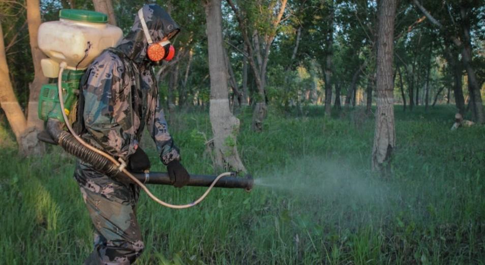 Как потратили 600 млн тенге на борьбу с гнусом в Павлодарской области