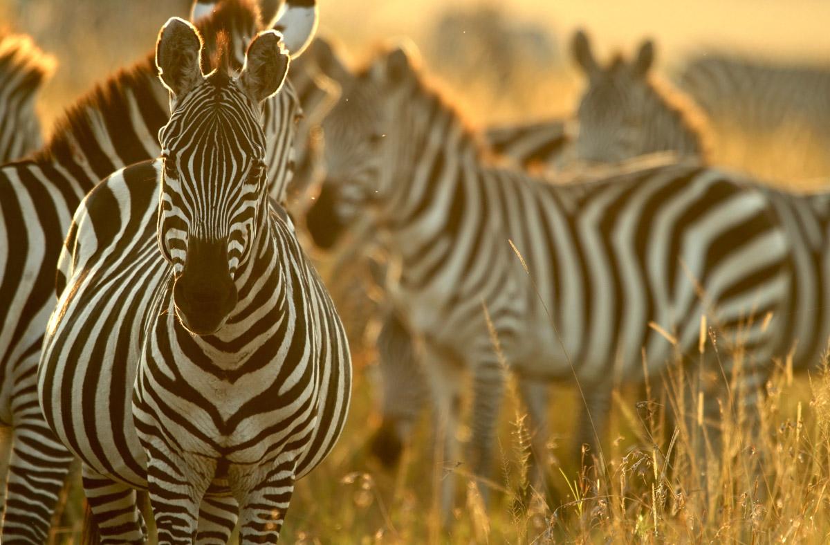 Кения в 2018 году заработала на туризме более полутора миллиардов долларов