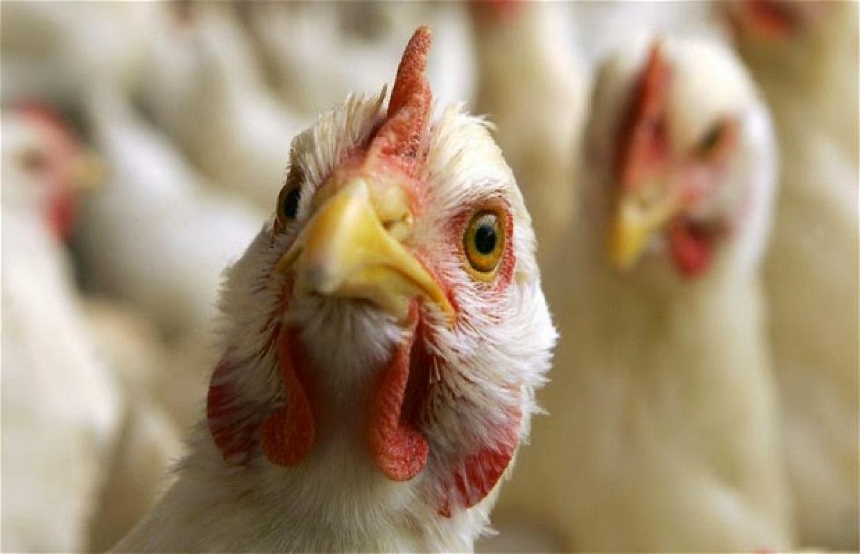 Казахстан запретил ввоз птицы из Ирана из-за птичьего гриппа