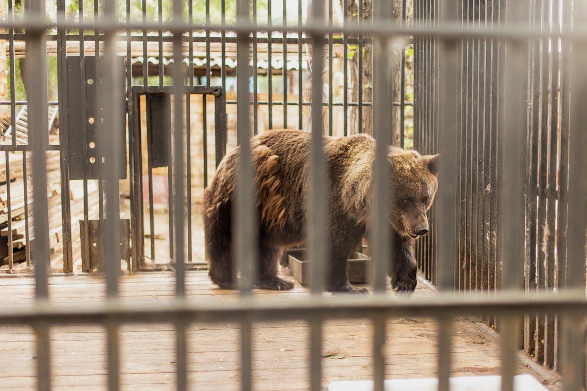 Больше 1500 животных карагандинского зоопарка могут зимой остаться на улице