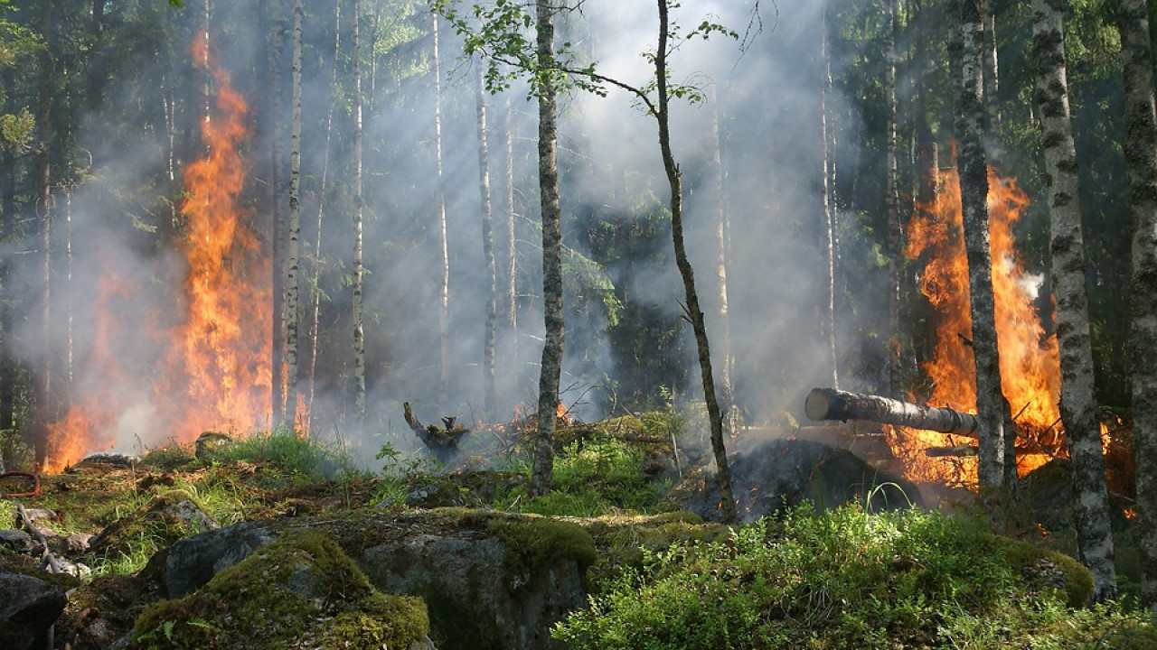 Лесостепные пожары в Баянаульском национальном парке полностью ликвидированы