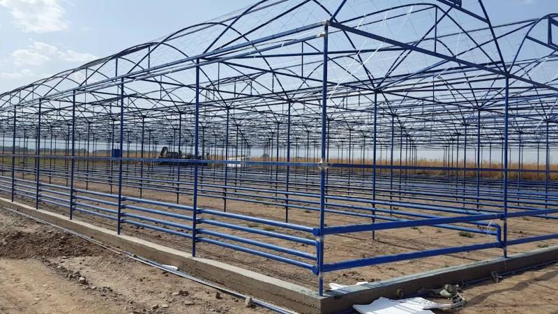Түркістан облысында жылыжай салуға 245 гектар жер телімі бөлінді