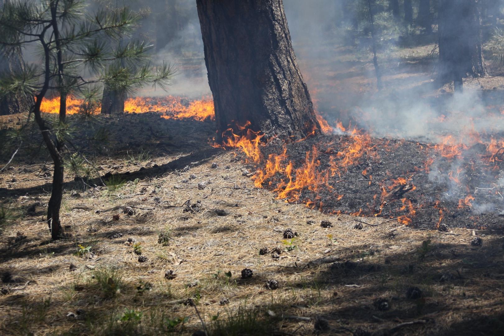 Гроза вызвала пожар в национальном парке в Павлодарской области