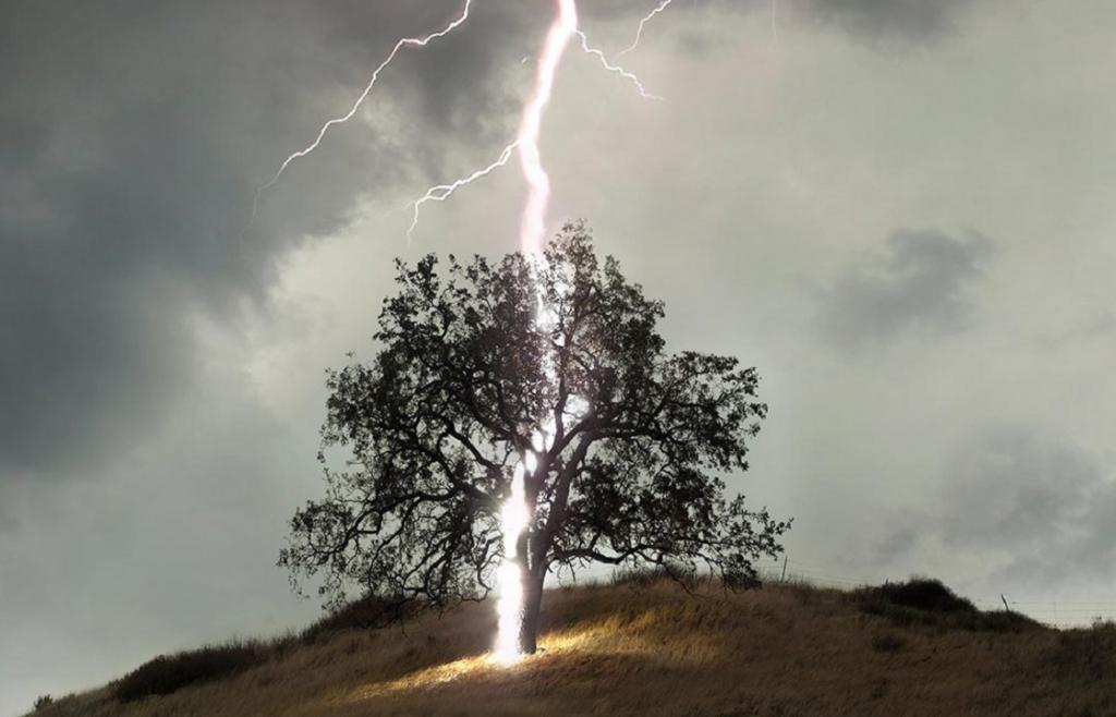 Молния ударила в дерево во время турнира по гольфу в США