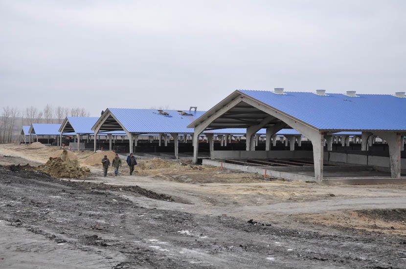 В Туркестанской области планируют построить откормочную площадку