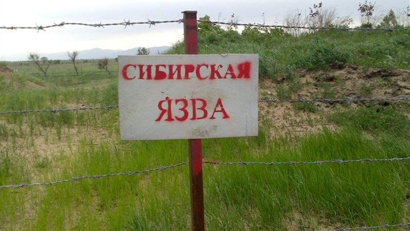 Смерть фермера в ВКО при забое скота прокомментировали в Минсельхозе