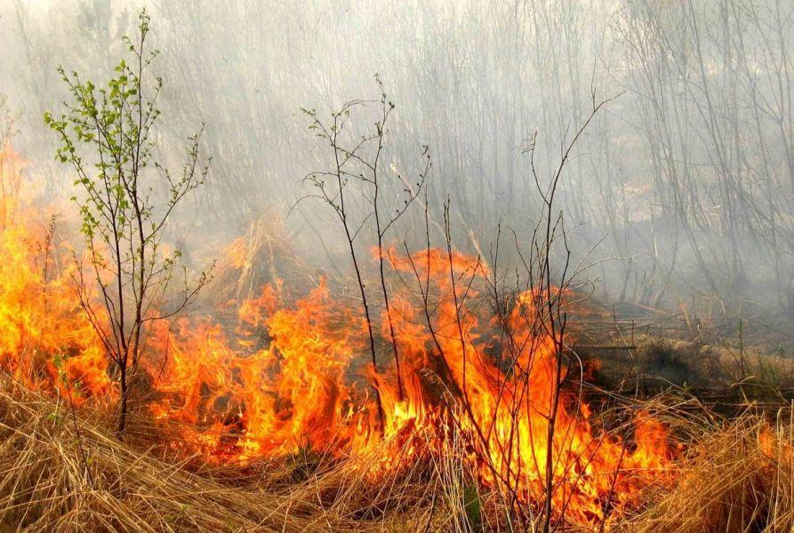Пожарные ликвидировали горение сухостоя близ воинской части в Туркестанской области
