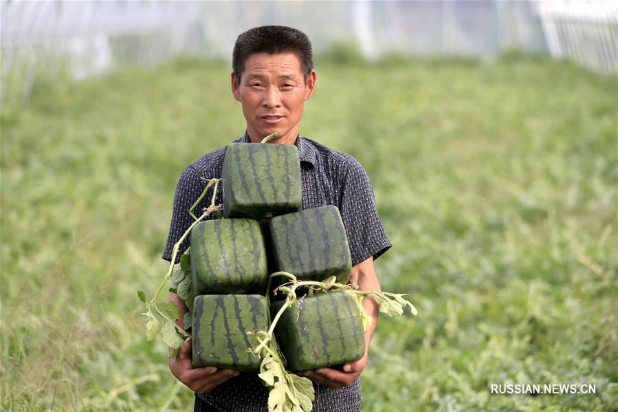 Кубические арбузы вышли на рынок Китая