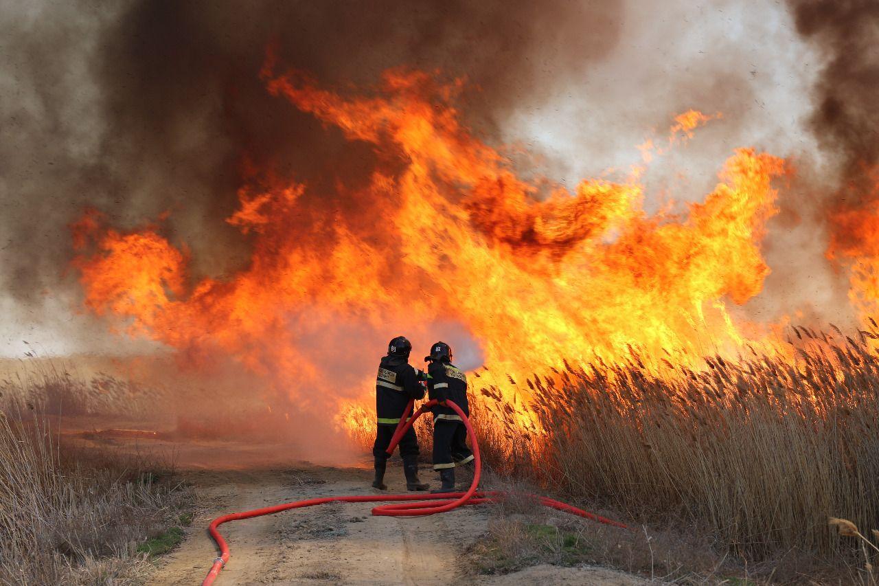 Пожаром на казахстанском побережье Каспия охвачена площадь в 110 га