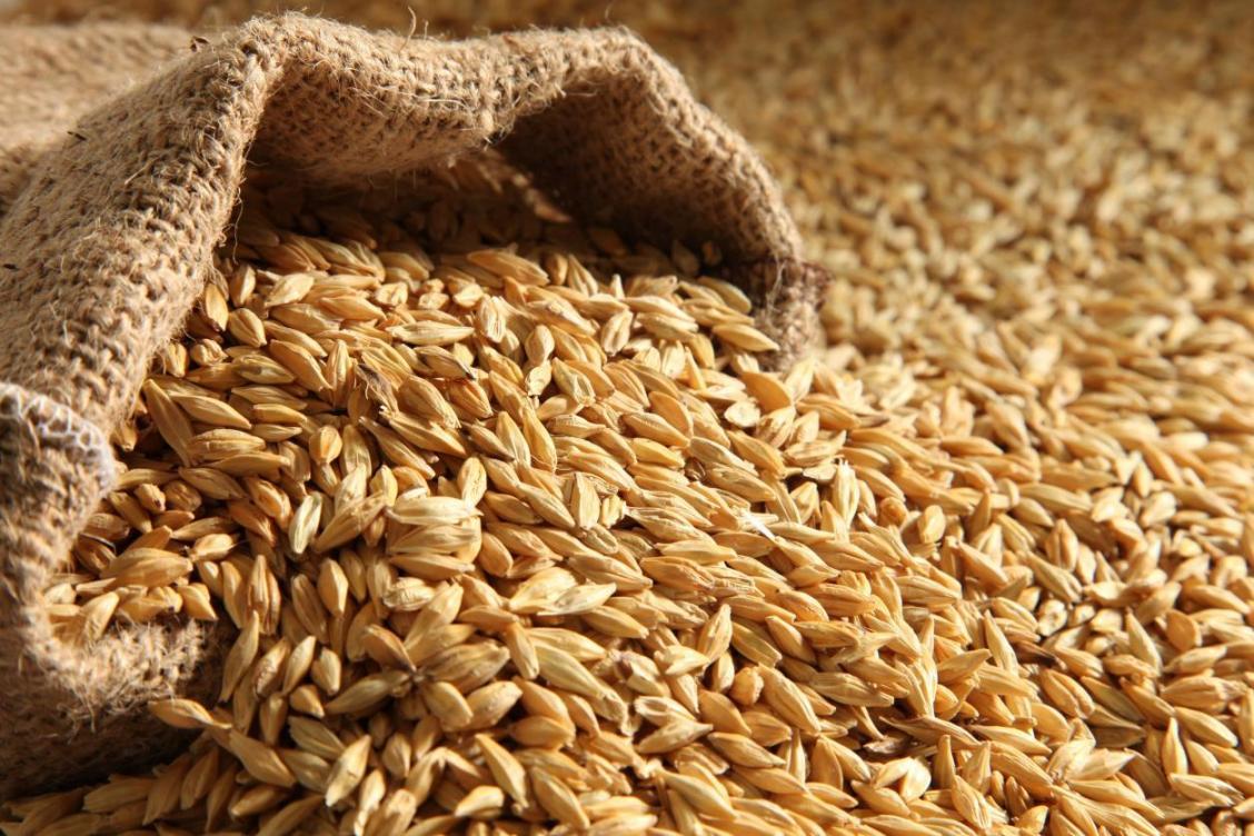 Урожайность зерновых выше, чем в прошлом году – МСХ РК