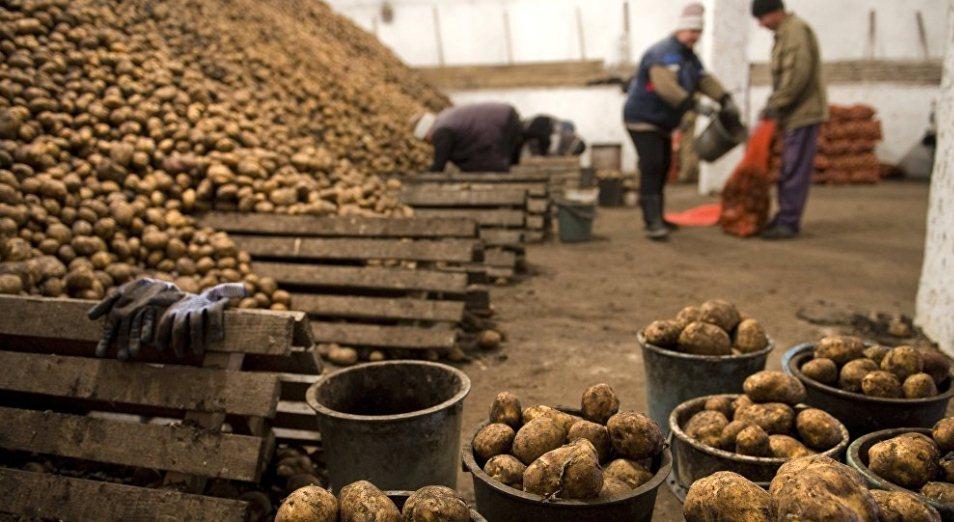 Казахстан ввел запрет на овощи из Кыргызстана и Узбекистана