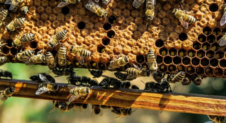 Пчеловоды ВКО переходят на канадскую технологию