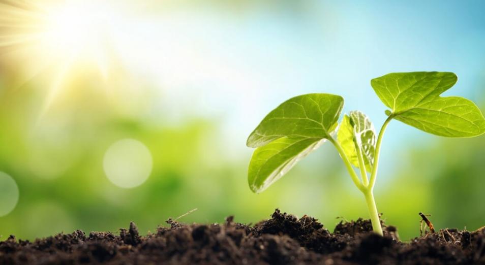 Эксперты считают, что, если бы не борьба с СOVID-19, экология стала бы главной мировой повесткой 2020 года