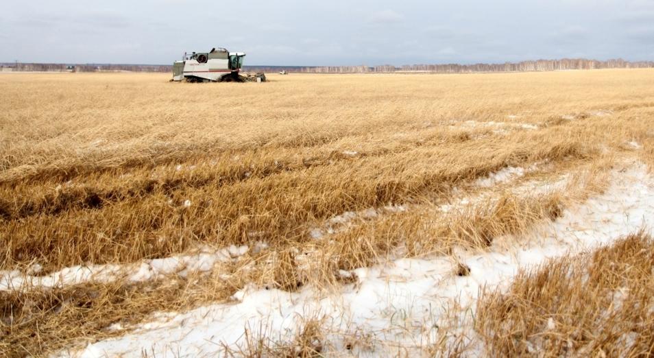 Часть казахстанских фермеров не успели собрать треть урожая зерна