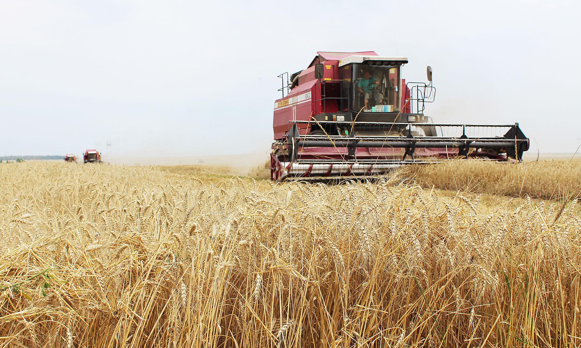 Казахстан с начала уборочной кампании намолотил 4,3 млн тонн зерна