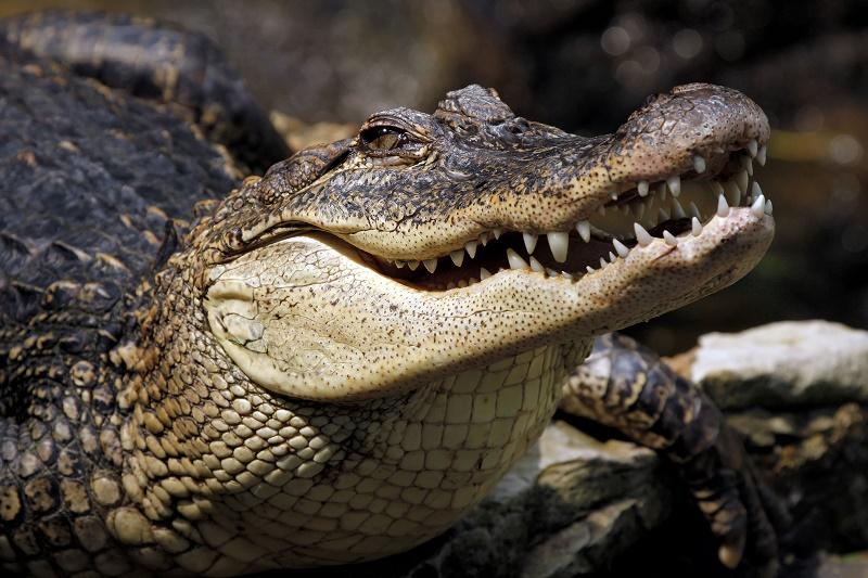 В Карагандинский зоопарк подбросили аллигатора и питона