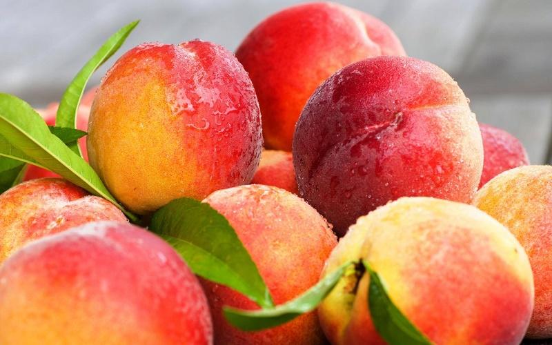 Более 210 тонн плодовоовощной продукции из Казахстана вернули россияне