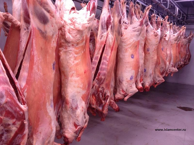 Халяльную продукцию экспортируют в Иран и Бахрейн из Жамбылской области