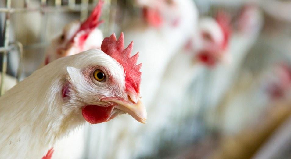 Птицефабрики грозят взлётом цен