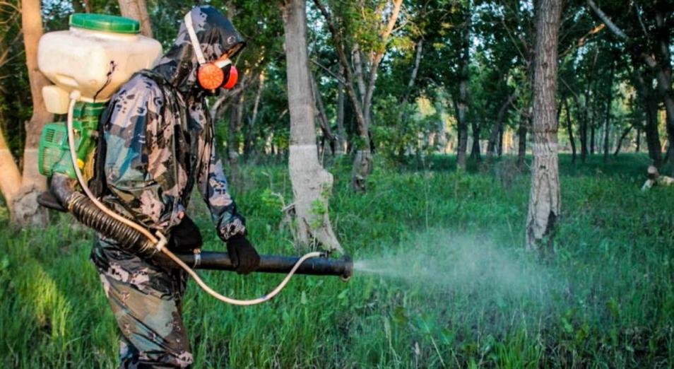 Дорогой гнус: борьба с комарами и мошками обойдется в 602 млн тенге