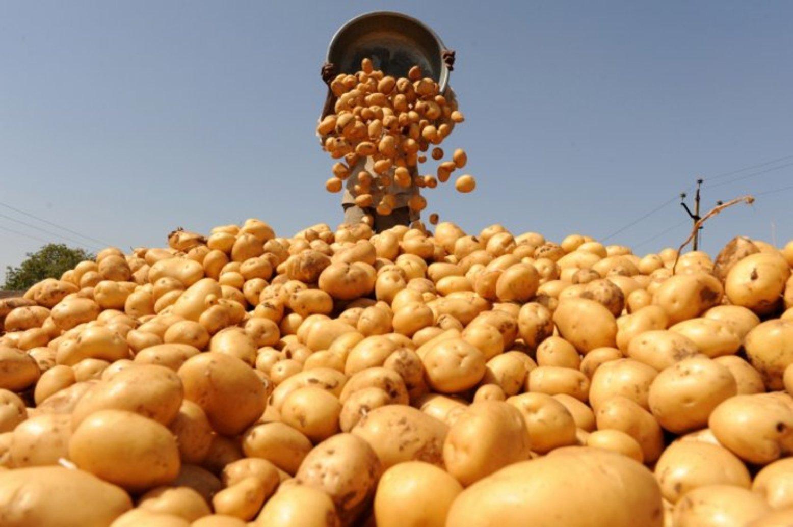 Казахстан заявил о неправомерности возврата Россией картофеля и дынь из-за отсутствия производителей в списке экспортёров