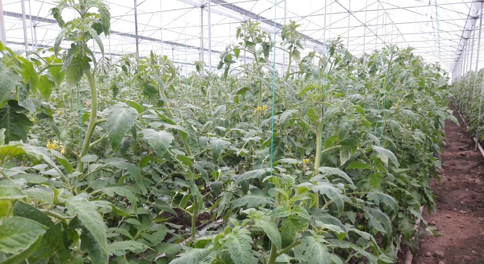 Фермеров вывели из тепличных условий