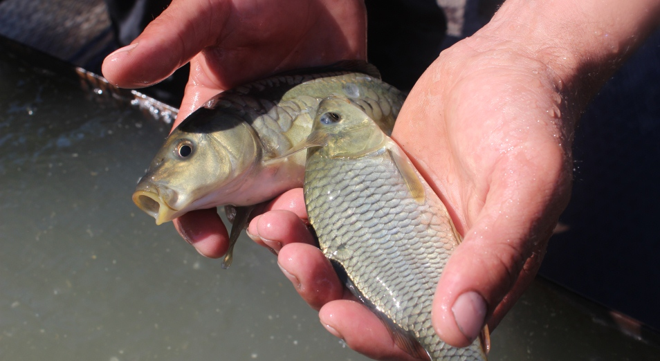 u-reki-bez-ryby