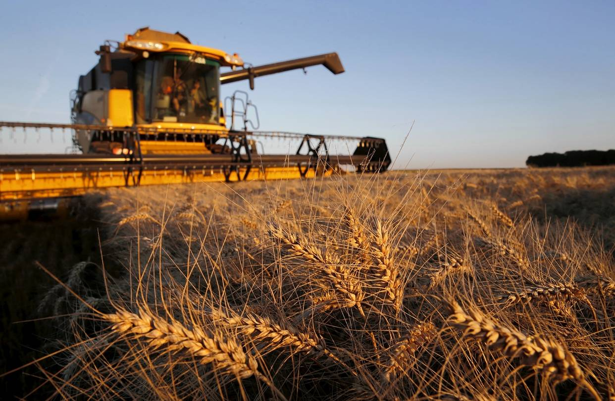 Минсельхоз РК понизил прогноз сбора зерновых до 17 млн тонн в 2019 году