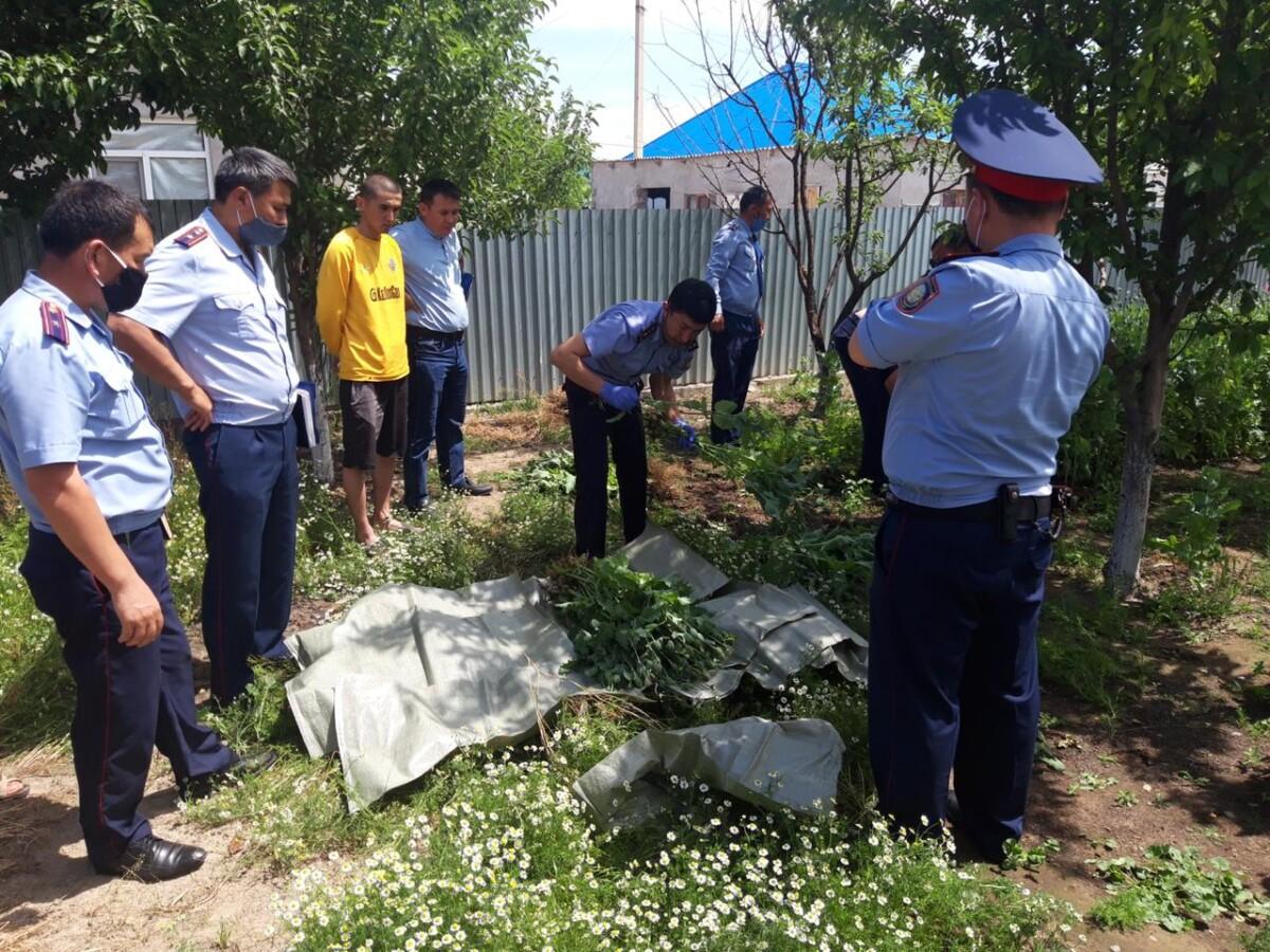 В Туркестанской области у 80-летнего пенсионера изъяли 62 кг наркотиков