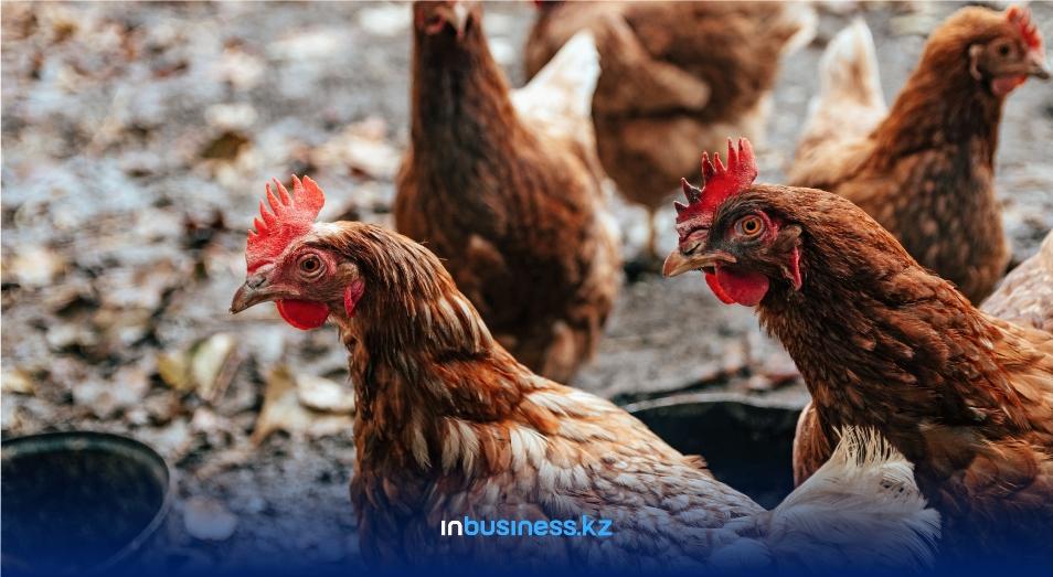 В Павлодарской области начали выплачивать компенсацию за уничтоженную птицу