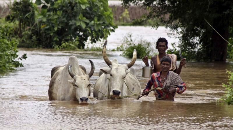 В Индии растёт число жертв наводнений
