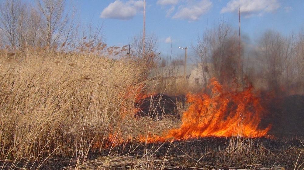 Сухостой горит в Восточном Казахстане