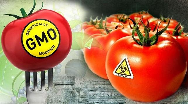В ЕАЭС вводятся новые требования к маркировке продуктов с ГМО