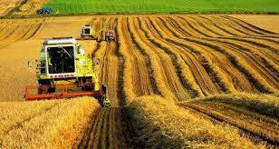 Единый сельскохозяйственный налог просят ввести казахстанские аграрии
