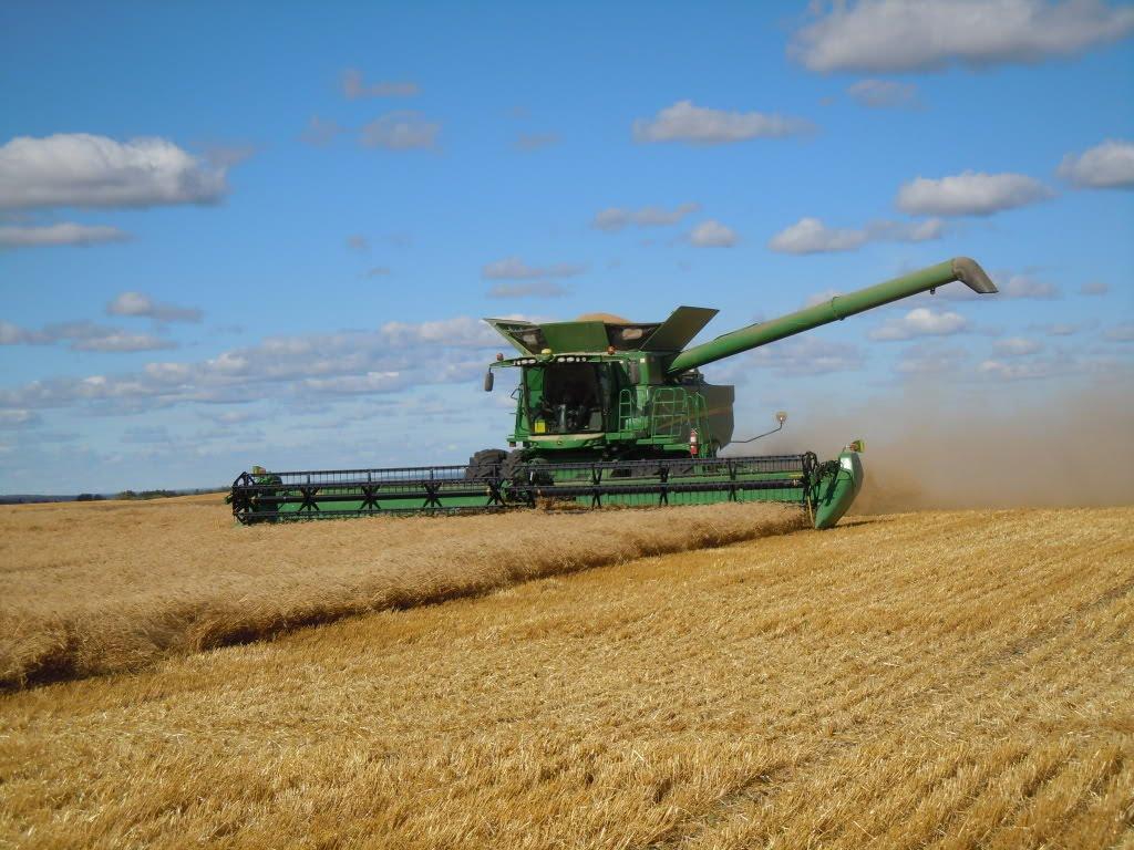 Более половины площадей зерновых убрано в ВКО