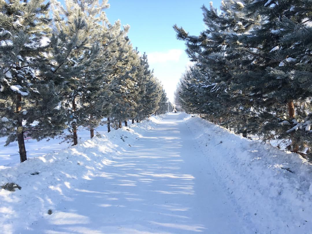 Погоду без осадков прогнозируют синоптики в воскресенье