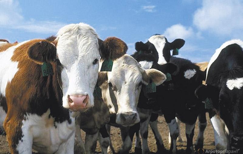 Сельхозпроизводство в Казахстане сократилось на 0,2%