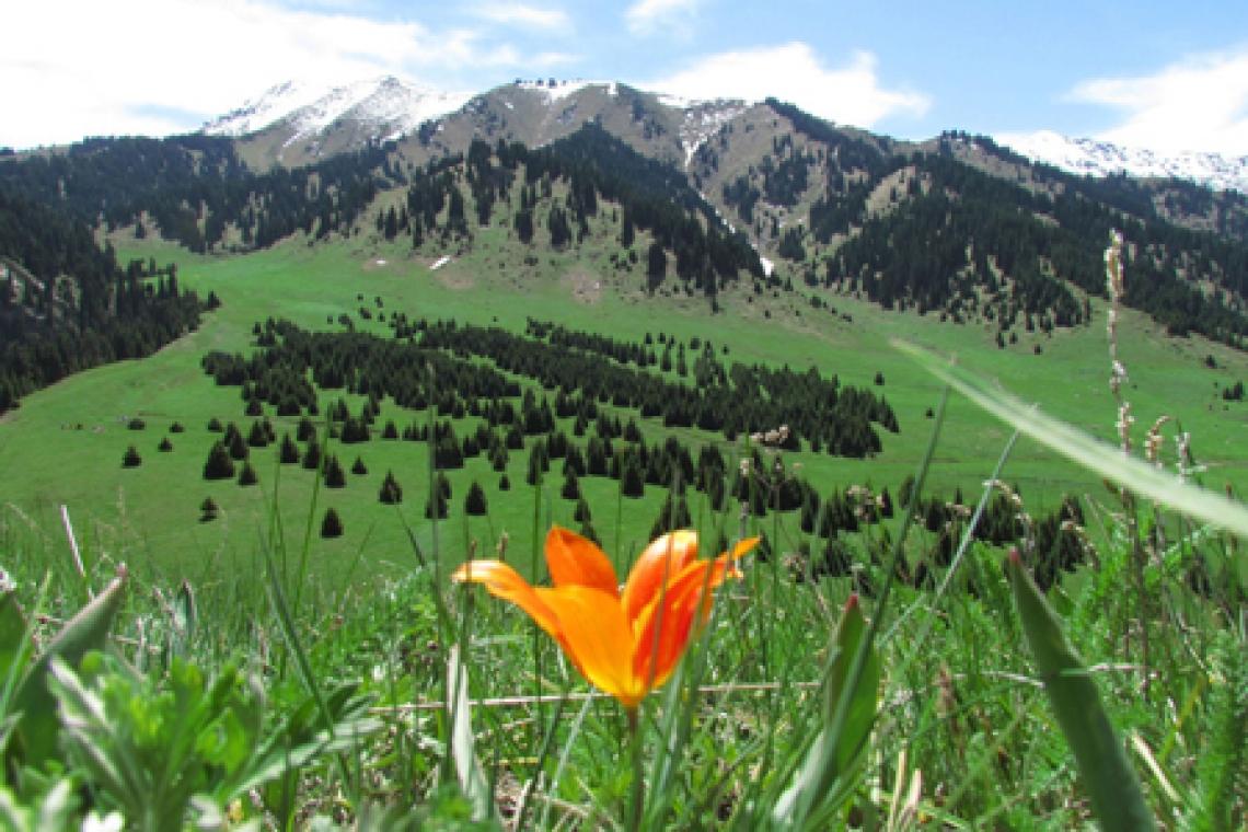 В казахстанских национальных природных парках планируют применять американскую модель экотуризма