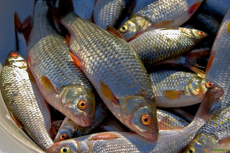 На 2,5 тысячи тонн увеличился улов рыбы в Атырауской области