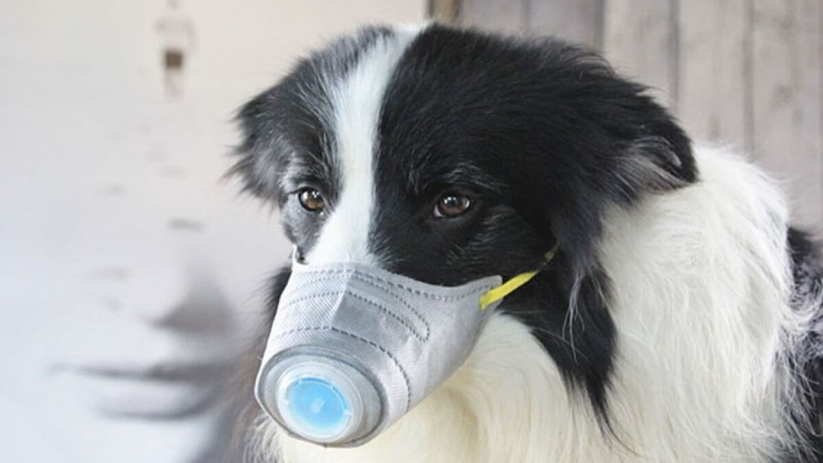 Эксперт: зараженные коронавирусом домашние животные безопасны для людей