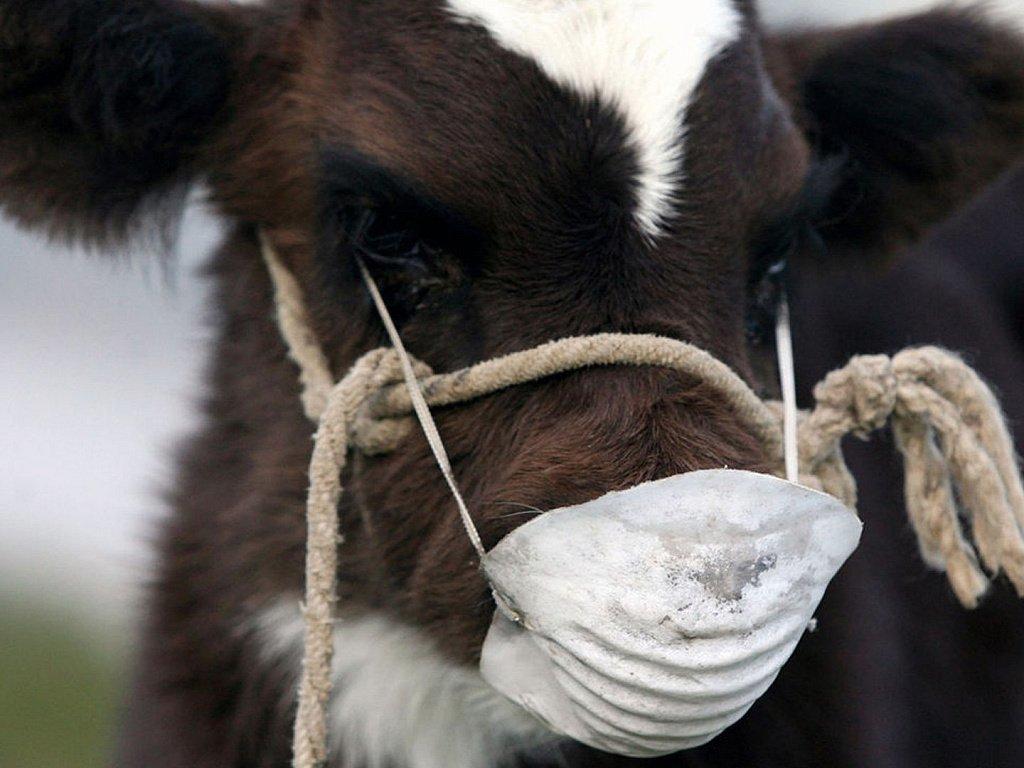 Казахстан из-за ящура запретил ввоз и транзит животных и продукции из Забайкалья
