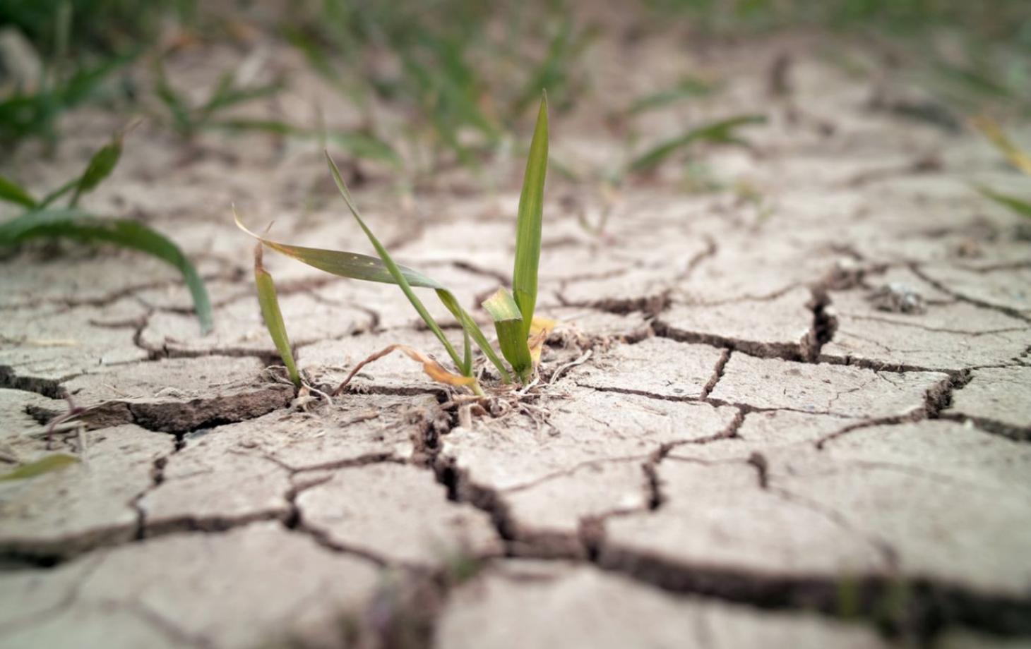 Фермеры могут получить «удешевленную» защиту от засухи