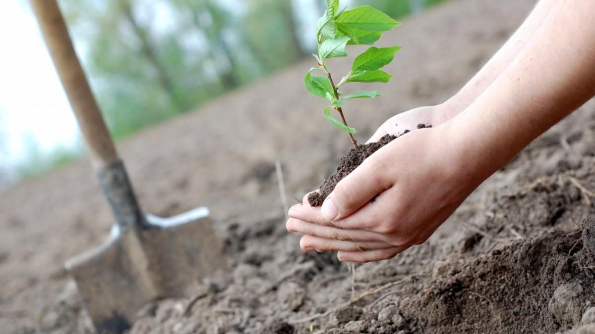 На озеленение Актау выделено более 760 млн тенге