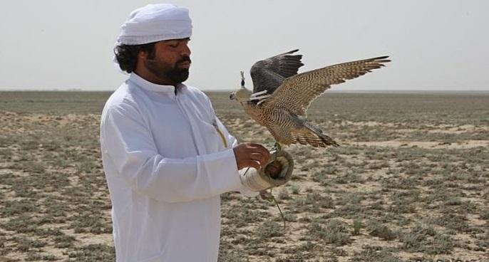 Араб шейхтарына дуадақ аулауға рұқсат берілді